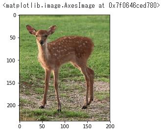高解像度の鹿